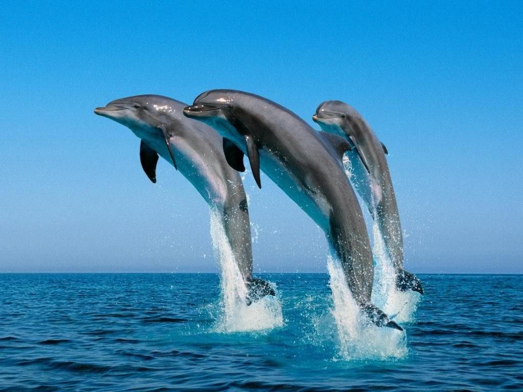 Photos sous marine  1461055926_delfini